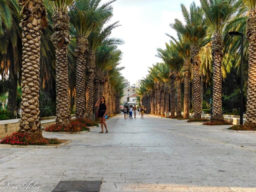 שדרת הדקלים בגן העיר