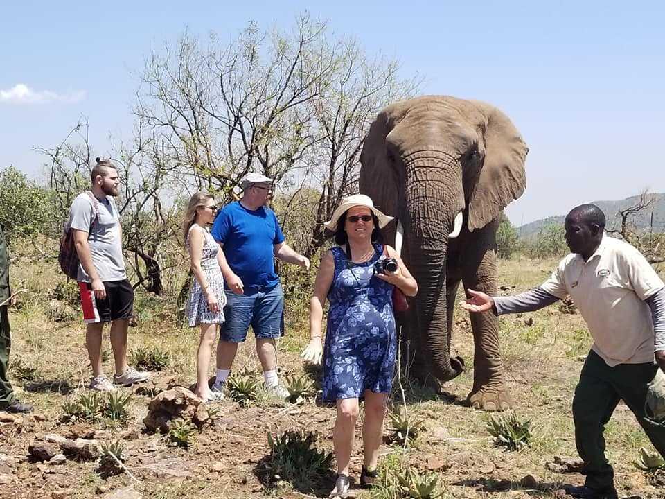 הליכה עם פילים