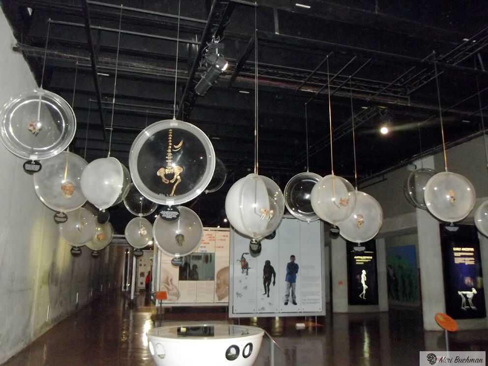 מוזיאון ערש האנושות