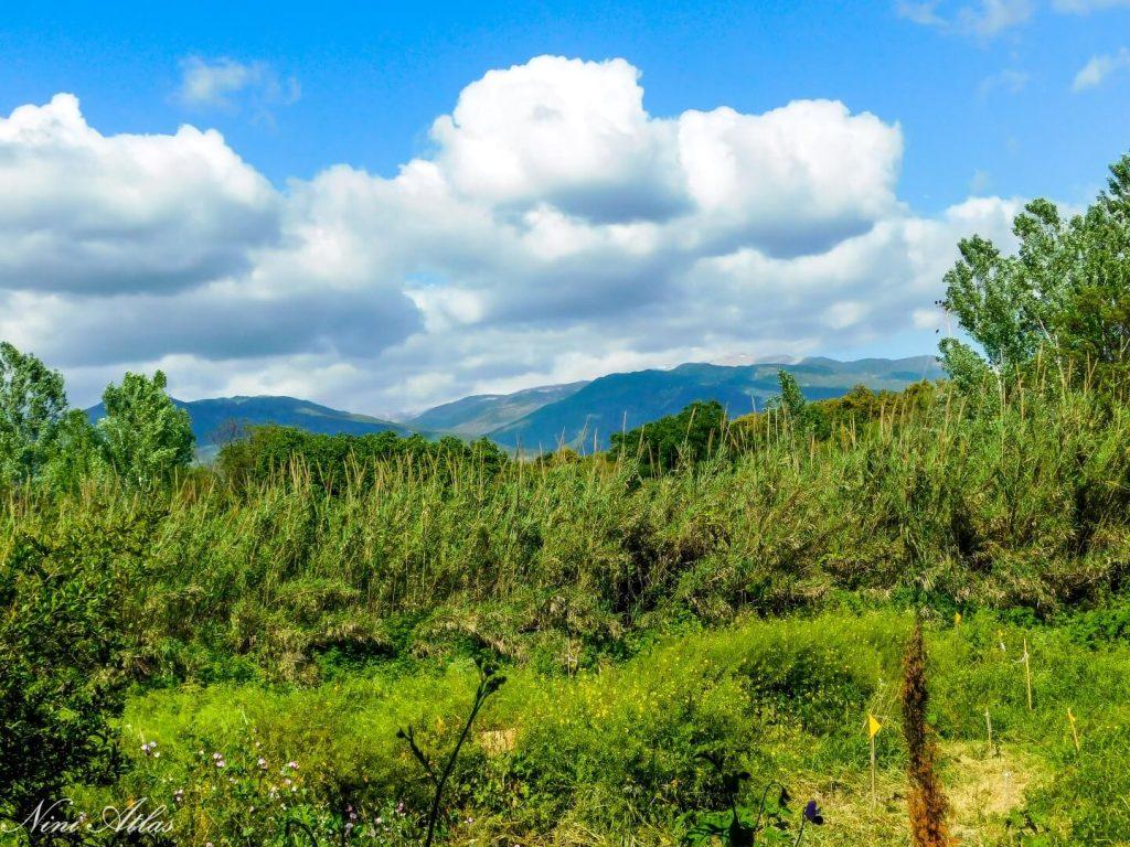 יער מאכל יער קורן