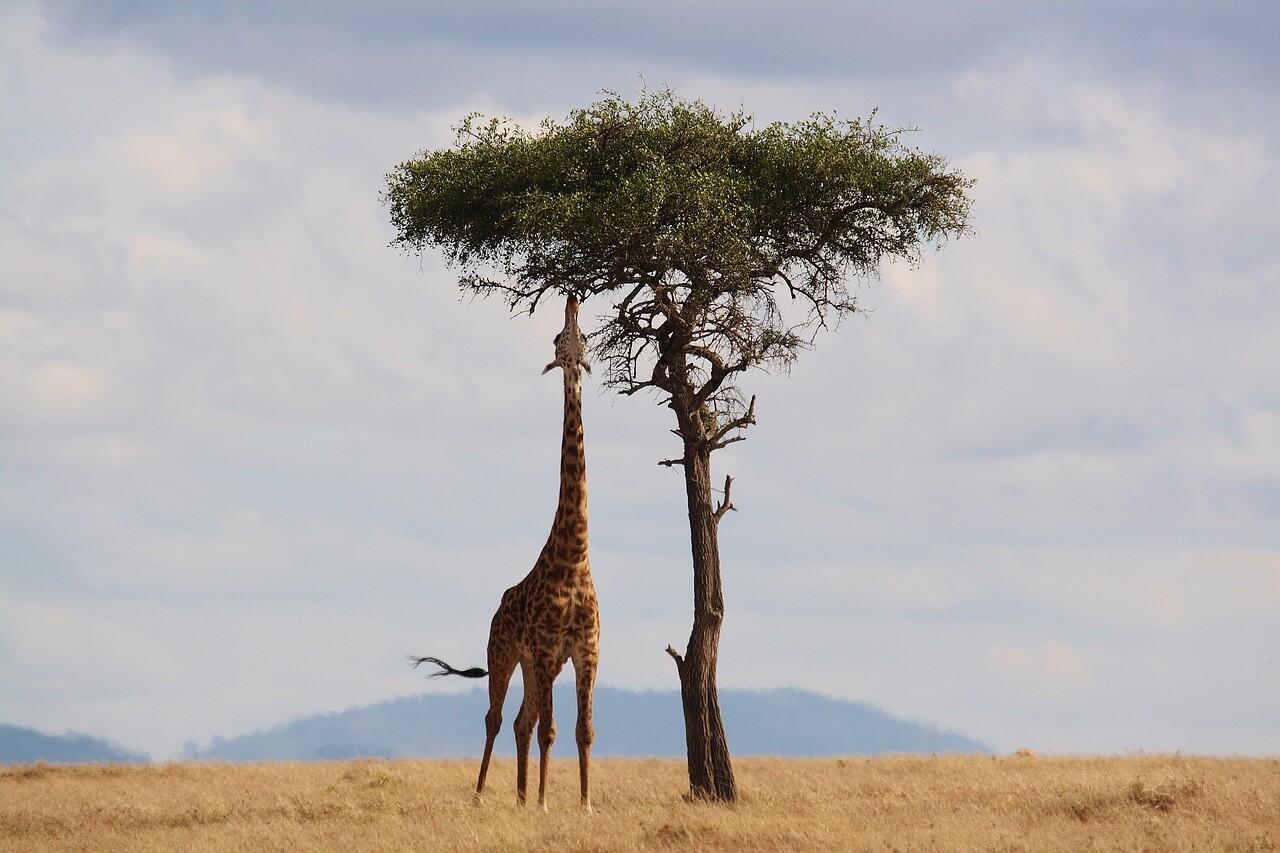 טיול ספארי באפריקה - חוויה ייחודית ובלתי נשכחת