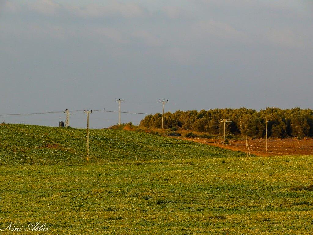 נוף שדות