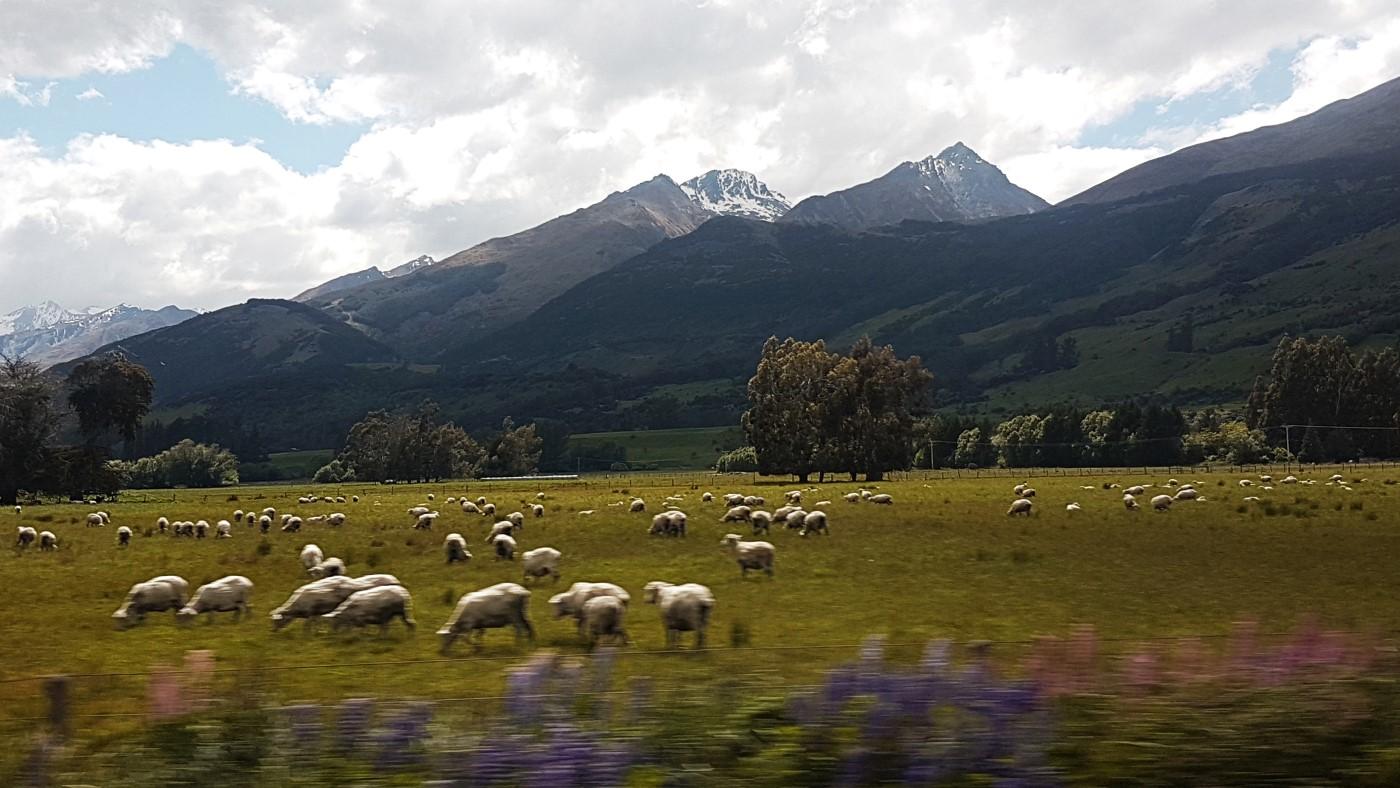 מטיילים בניו זילנד    דברים שכדאי לדעת