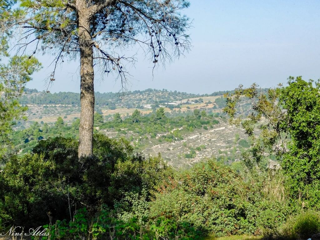 נוף מיער הקדושים