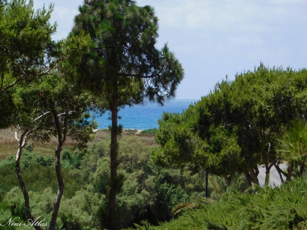 פסיפס הציפורים קיסריה מבט אל הים