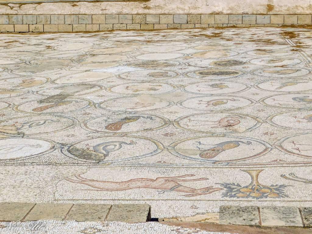 פסיפס הציפורים קיסריה