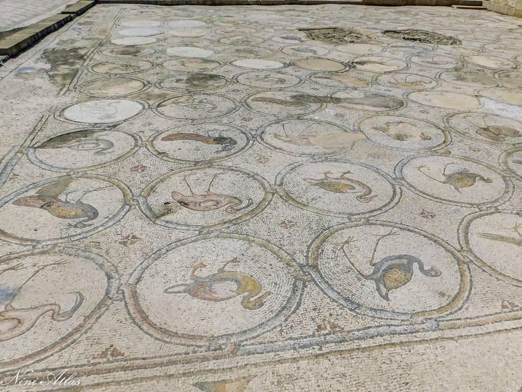 מדליוני ציפורים פסיפס הציפורים קיסריה